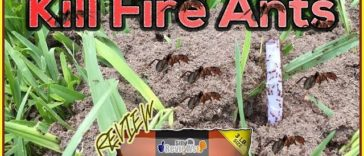eliminator-killer-plus-fire-ant-granules-review-how-to-kill-fire-ants-youtube-thumbnail-364x156
