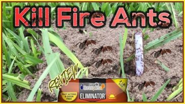 eliminator-killer-plus-fire-ant-granules-review-how-to-kill-fire-ants-youtube-thumbnail-364x205