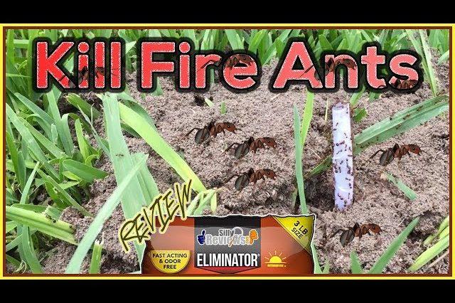 eliminator-killer-plus-fire-ant-granules-review-how-to-kill-fire-ants-youtube-thumbnail-640x426